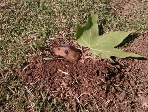 Local Neighborhood gopher