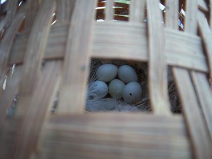 eggsinnest